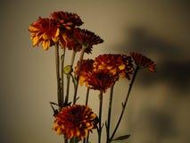 Flower. Garden Yellow Orange Ec Stock Photo