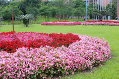 Flower garden of the yilan county government Stock Photography