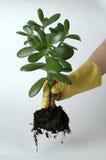 Flower gardener. Agriculture, background, can, crop, dirty, flower, fruits, gardener Stock Images