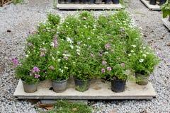 Flower gardening Royalty Free Stock Images