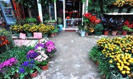 Flower gardening store Stock Images