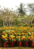 Flower gardens. Group of colorful flowers on gardens Stock Images