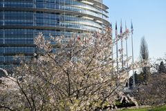 The flower gardens around the European Parliament in Strasbourg. Peach trees bloomed around the European Parliament in Strasbourg - France 01 Stock Images