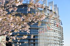 The flower gardens around the European Parliament in Strasbourg. Peach trees bloomed around the European Parliament in Strasbourg - France 03 Stock Image