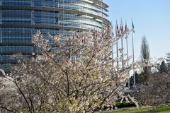 The flower gardens around the European Parliament in Strasbourg. Peach trees bloomed around the European Parliament in Strasbourg - France 02 Stock Photos