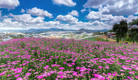 Flower gardens on the plateau of Dalat Stock Photography
