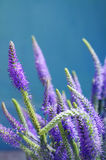 Flower gentle background with summer lilac wild flowers Royalty Free Stock Photos