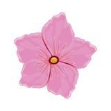 Flower geranium florish image. Illustration eps 10 vector illustration