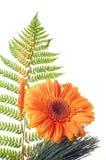 Flower Gerber Royalty Free Stock Photo