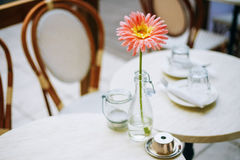 Flower Gerbera Daisy In Bottle Vase Stand On Table Royalty Free Stock Images