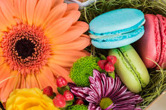 Flower gerbera and macaroon closeup Royalty Free Stock Image