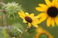 Flower' giallo; famiglia di s nel yhe nature' mondo di s fotografia stock