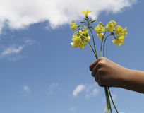 Flower gift (horizontal). Child's hand offering yellow flowers Stock Images