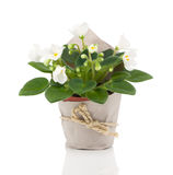 Flower for gift in paper packaging Stock Photo