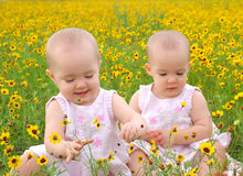 Flower Girl Twins. Twin little girls play in a field of yellow flowers Royalty Free Stock Images
