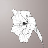 Flower gladiolus. Contour graphic art Royalty Free Stock Images