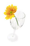 Flower on glass Stock Image