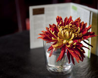 Flower in glass Royalty Free Stock Photo