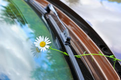 Flower on glass of the car Stock Photos