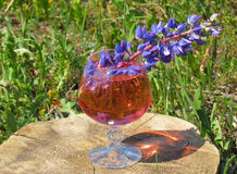 Flower in a glass of champagne. In the sun Royalty Free Stock Image