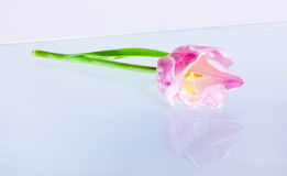Flower on glass surface Stock Images