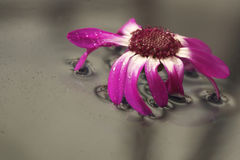 Flower on glass table of water Stock Images