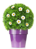 Flower globe Royalty Free Stock Image