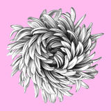 Flower. royalty free illustration