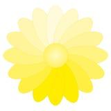 Flower Gradient Stock Photography