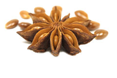 Flower with grains of star anise Stock Photo