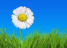 Flower on grass Stock Photo