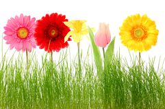 Flower and grass Stock Image