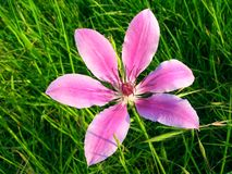 FLOWER ON GRASS Royalty Free Stock Images