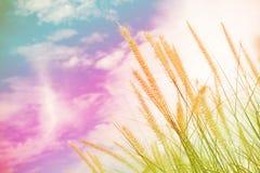 Free Flower Grass Stock Photo - 59335270