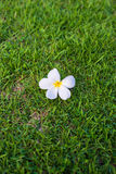 Flower on grass Stock Photography