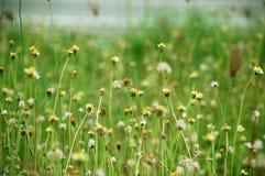 Flower & Grass Stock Photo