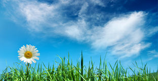 Flower with grass Stock Photography
