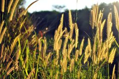 Flower grass Stock Photos