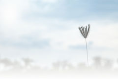 Flower grass blowing in the wind motion blur sky background Stock Images