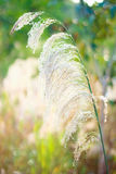 Flower Grass. Flower , grass , bokeh , close-up , green , plant , can Stock Photos