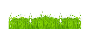 Flower and grass Borders set. vector illustration Stock Image