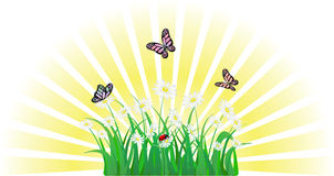 Flower, grass, butterfly and ladybird Royalty Free Stock Photography