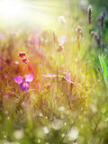 Flower and grass covered with dew Stock Image