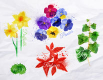 Flower grass daffodils, pansies, ivy, red acer Stock Photos