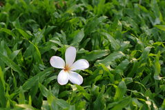 Flower on the green grass field Stock Images