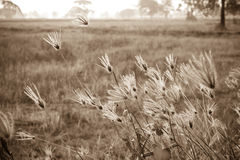 Flower of grass. On field Royalty Free Stock Photography