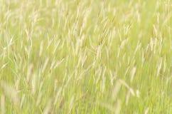 Flower grass Stock Image