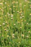 Flower Grass field Stock Images