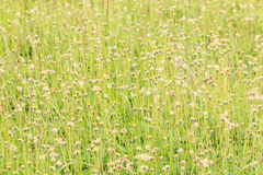 Flower Grass field. In spring stock photos