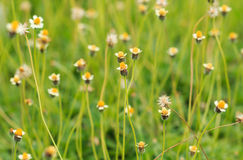 Flower Grass field. In sunlight stock photos